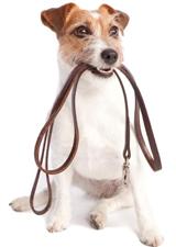 Domiciliary Care - Dog Walking