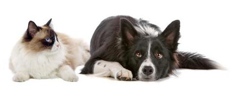 Mum's Helping Hands - Services - Pet Sitting and Dog Walking Nottingham